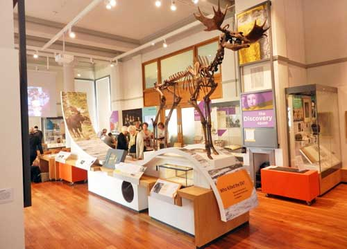 Poulton Elk at the Discover Preston gallery